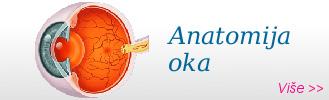 anatomija oka