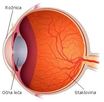 rožnica, očna leća, staklovina