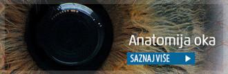 anatomija oka, dijelovi oka